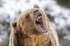 Ne pas chatouilller l'ours, conseil aux Ukrainiens